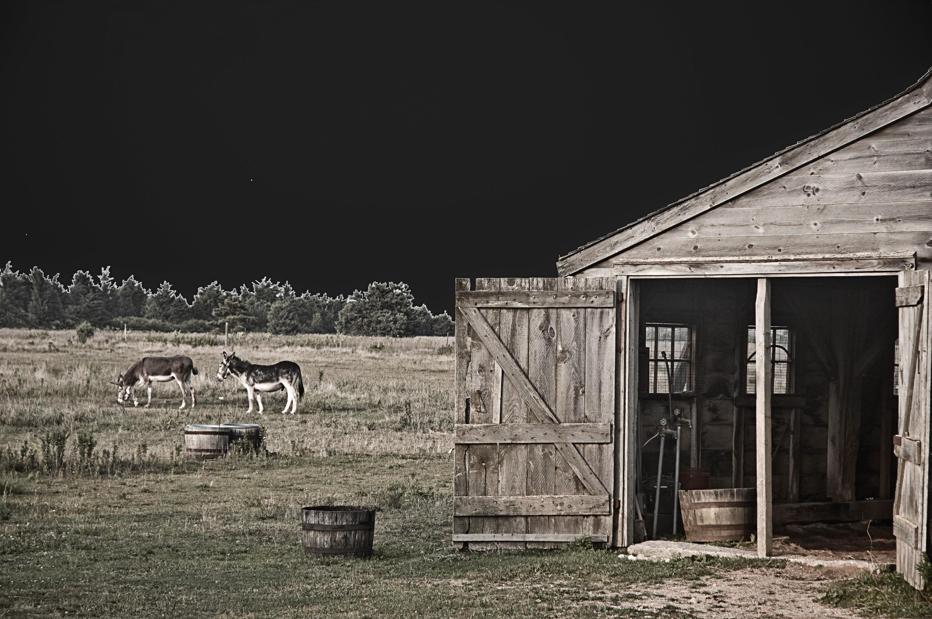 Barn Scene1