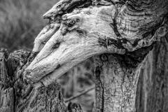 driftwood_lvb